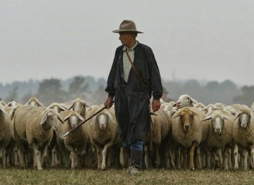 Pastoracinė tarnystė šiandien: aktualijos ir problematika